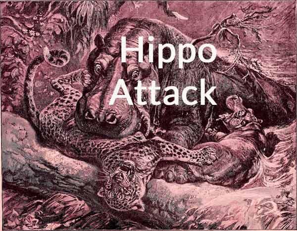 hippo-attack