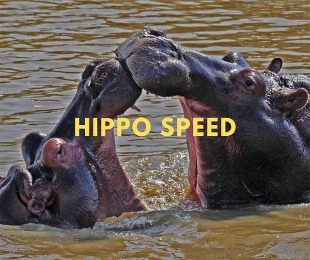 hippo-speed