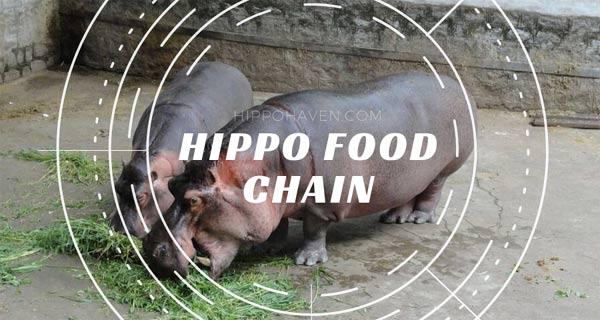 Hippo-food-chain