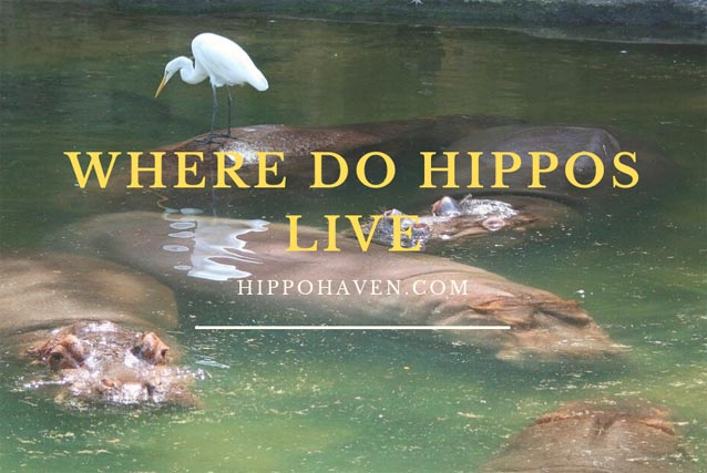 Where-do-Hippos-Live