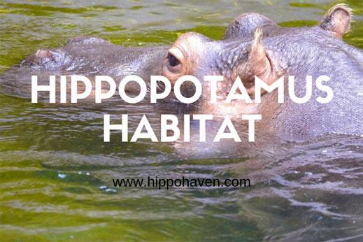 hippopotamus-habitat