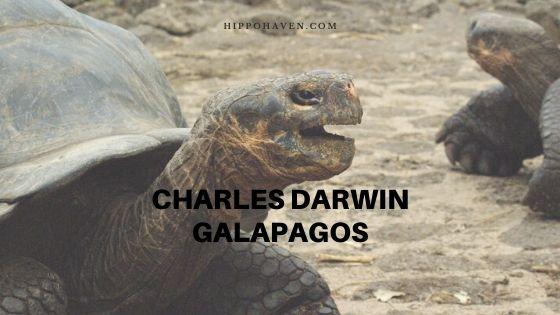 charles darwin galapagos