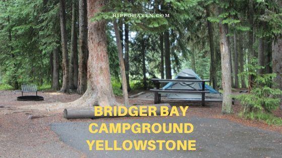 bridger bay campground yellowstone