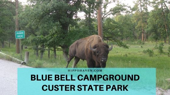 blue bell campground custer state park