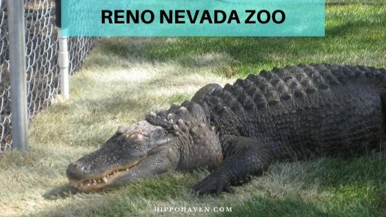 Reno Nevada Zoo