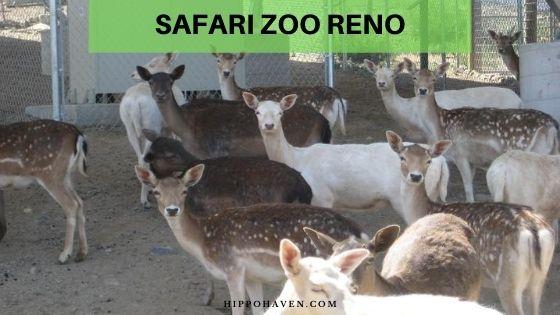 safari zoo reno
