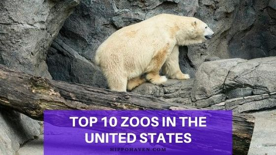 top 10 zoos in the united states