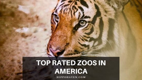 top rated zoos in America