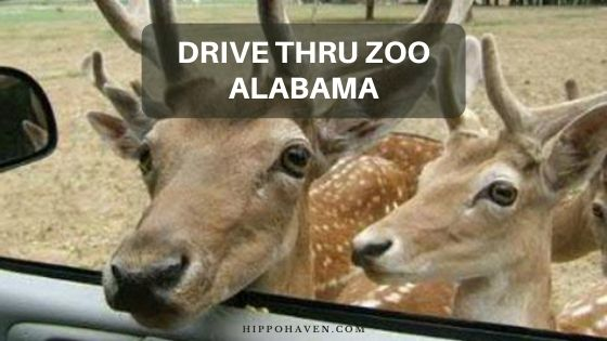 drive thru zoo Alabama
