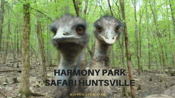 harmony park safari huntsville al safari park montgomery al