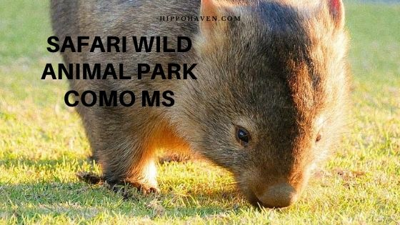 safari wild animal park como ms