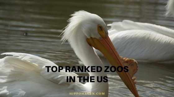 top ranked zoos in the us