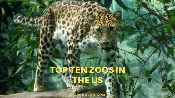 top ten zoos in the US