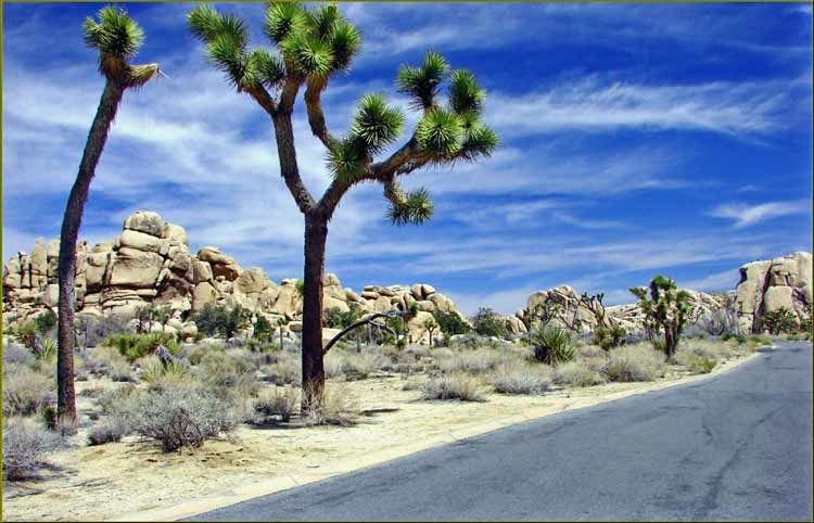 joshua tree attractions joshua tree national park joshua tree joshua tree campsites joshua tree airbnbs the joshua tree joshua tree park joshua national park jumbo rocks campground joshua tree inn cholla cactus garden joshua tree climbing joshua tree desert skull rock joshua tree joshua tree state park hidden valley joshua tree keys view joshua tree arch rock joshua tree cottonwood campground joshua tree joshua tree hiking joshua tree hot springs joshua tree at night joshua tree campground joshua tree visitors center best hiking in joshua tree joshua tree national park campsites planting joshua trees joshua tree np joshua tree bible joshua tree forest joshua tree 1991 black rock campground joshua tree joshua tree national park visitor center joshua tree elevation barker dam joshua tree joshua tree bouldering hidden valley campground joshua tree joshua tree national joshua tree cactus cap rock joshua tree lax to joshua tree joshua tree national forest joshua tree location joshua tree rock climbing cottonwood visitor center j tree hot springs near joshua tree jumbo rocks joshua tree sunrise joshua tree belle campground joshua tree joshua tree national monument joshua tree sunrise joshua tree day trip jtnp jumbo rocks campground joshua tree cholla cactus garden joshua tree joshua tree guide joshua tree rv park hipcamp joshua tree joshua tree accommodation joshua tree rocks black rock canyon campground visit joshua tree joshua tree winter joshua tree national park hiking joshua tree wildlife best campground in joshua tree joshua tree mountain project joshua tree east cottonwood joshua tree joshua tree tripadvisor joshua tree tree black rock joshua tree a joshua tree joshua tree mojave desert joshua state park joshua tree in january joshua tree to grand canyon joshua tree climbing guide joshua tree gift shop joshua tree national park location the joshua tree inn joshua tree cactus garden joshua tree in november natural hot springs near joshua tree joshua tree yurt giant rock joshua tree joshua tree attractions split rock joshua tree geology tour road cottonwood springs joshua tree joshua tree observatory joshua tree to do joshua tree monument joshua tree nps grand canyon to joshua tree blm joshua tree tree national park joshua tree in february maze loop joshua tree joshua tree vacation joshua tree altitude joshua tree national park elevation joshua tree wood joshua tree geology joshua tree national park tour joshua tree national park winter joshua tree national park airbnb joshua tree blm show me a joshua tree joshua tree blooms best campsites in joshua tree joshua tree national park tripadvisor joshua tree off road one day in joshua tree joshua tree trip joshua tree logo joshua tree christmas joshua tree national park night geology tour road joshua tree hidden valley joshua tree national park joshua tree rv yucca joshua tree joshua tree arch joshua tree in april blackrock campground joshua tree best joshua tree airbnb joshua tree hostel big rock joshua tree cottonwood visitor center joshua tree staying in joshua tree joshua tree lodge joshua tree national park campground joshua tree summer joshua tree national park skull rock sport climbing joshua tree joshua tree mountains visit joshua tree national park joshua tree national park rock climbing weekend in joshua tree joshua tree gifts joshua tree road joshua tree png growing joshua tree booking joshua tree joshua tree national park lodge joshua tree shop joshua tree paintings campsites near joshua tree joshua tree air b and b joshua tree domes water joshua tree joshua tree posters tree national night joshua tree the joshua tree national park the joshua tree park joshua tree to lax keys view joshua tree national park joshua tree ranch joshua tree to coachella joshua tree national park accommodation joshua park national park joshua tree to yosemite joshua cactus city near joshua tree national park joshua tree in july joshua tree to sequoia national park joshua tree in august pine city joshua tree joshua tree price joshua tree national park reviews sfo to joshua tree joshua tree pass joshua tree in october giant joshua tree best western gardens joshua tree towns near joshua tree joshua tree in joshua tree driving tour visitor center joshua tree joshua tree travel guide joshua tree national park climbing cholla garden joshua tree black rock canyon joshua tree joshua tree parking elevation joshua tree joshua tree in may joshua tree black rock joshua tree dam joshua tree national park association rei joshua tree joshua tree information joshua tree national park attractions joshua tree national park wildlife joshua tree national park pass joshua tree bouldering guide joshua tree hidden valley campground joshua tree road trip joshua tree park pass hidden valley national park